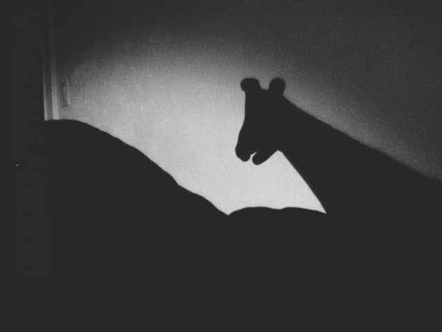 A Denver Home Companion | shadow puppets